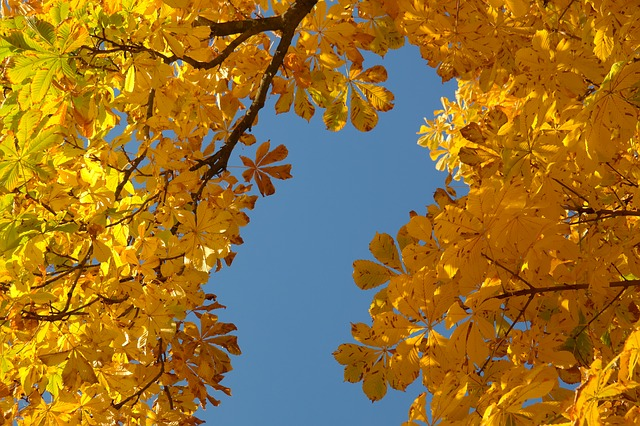 chestnut-leaves-228072_640